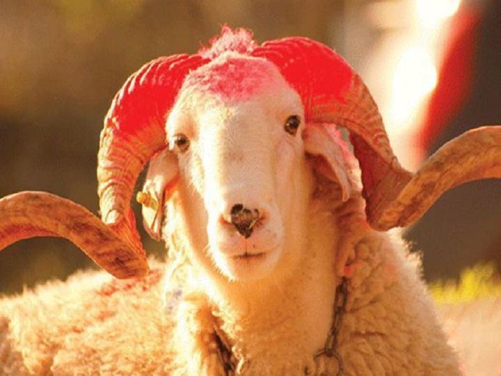 Bu gün Azərbaycanda Qurban bayramı qeyd edilir