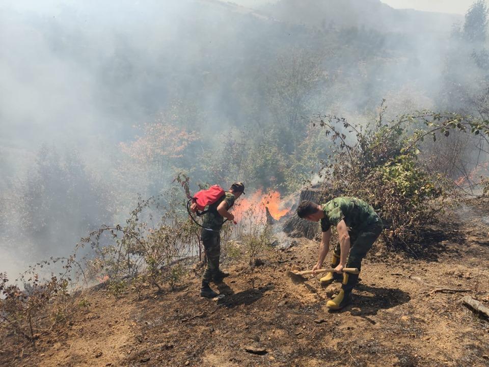 Ирада Ибрагимова: На месте каждого уничтоженного огнем дерева будет посажено новое – ФОТО – ВИДЕО – ОБНОВЛЕНО
