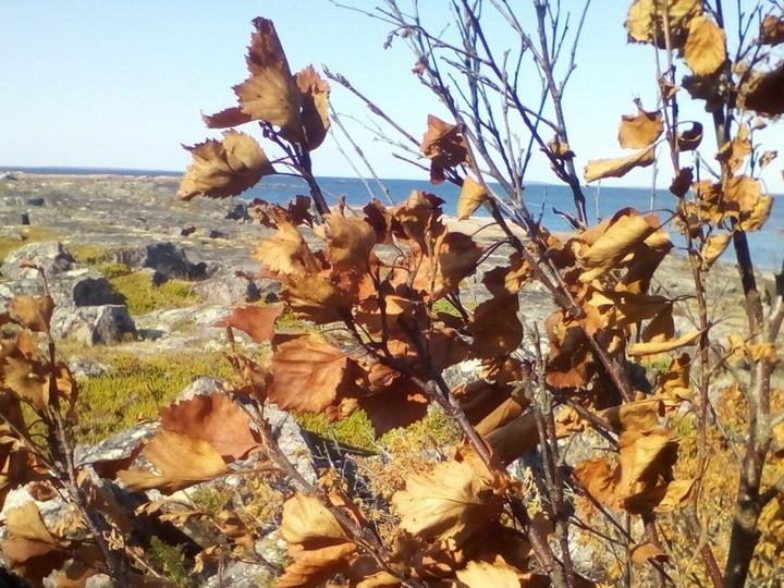 В Карелии после взрыва под Северодвинском засохли деревья и исчезли даже поганки - ФОТО - ВИДЕО