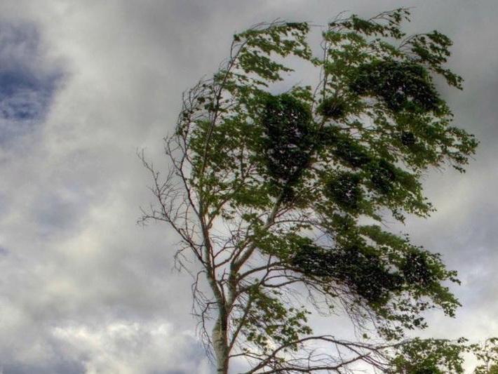 В среду днем на Абшероне усилится ветер