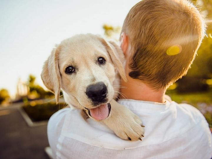 Ученые: Наличие в доме собаки снижает риск смерти хозяина