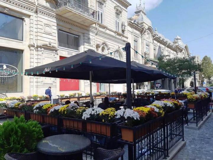 Предприниматели Баку активно озеленяют столицу - ФОТО