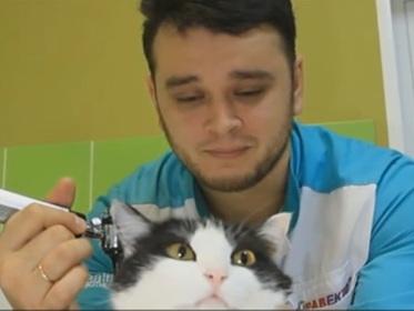 Российскому ветеринару пригрозили тюрьмой за спасение животных от эвтаназии