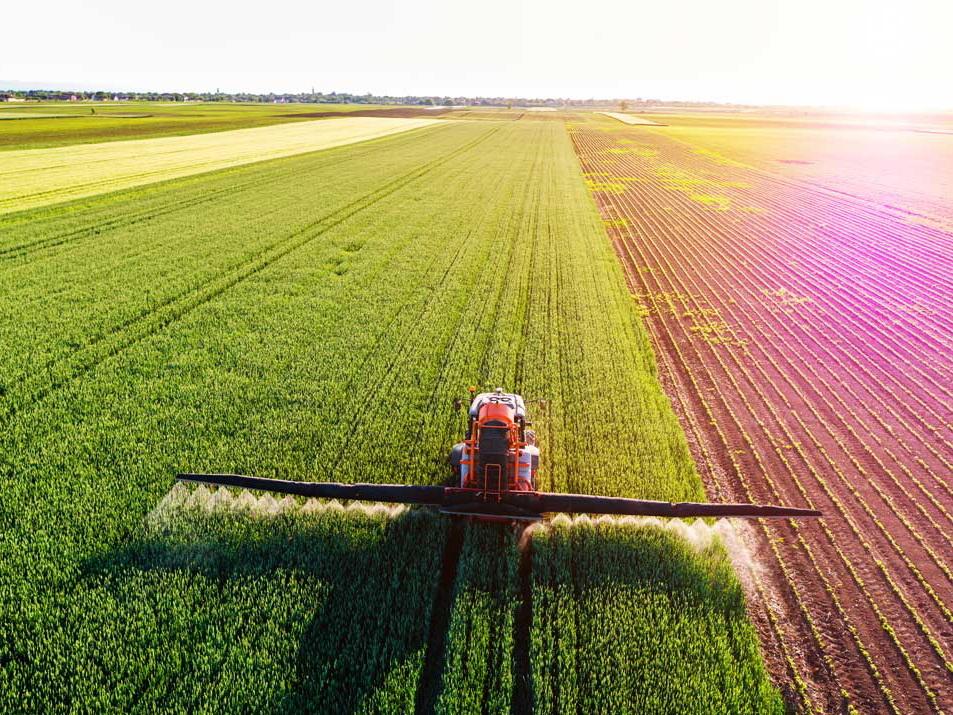 Сельское хозяйство: итоги девяти месяцев 2019 года