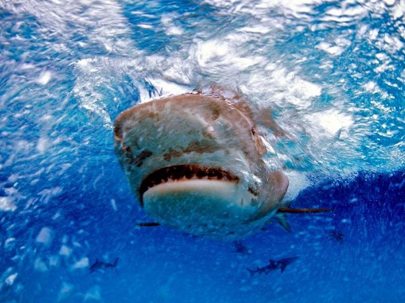 Köpək balığının mədəsindən barmağında nişan üzüyü olan insan əli çıxdı