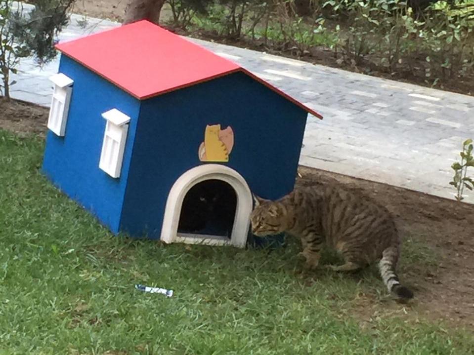Волна добра: Домики для кошек появились в Наримановском районе Баку – ФОТО