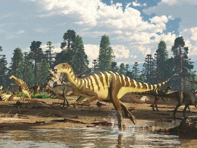 Yeni dinozavr növü tapıldı