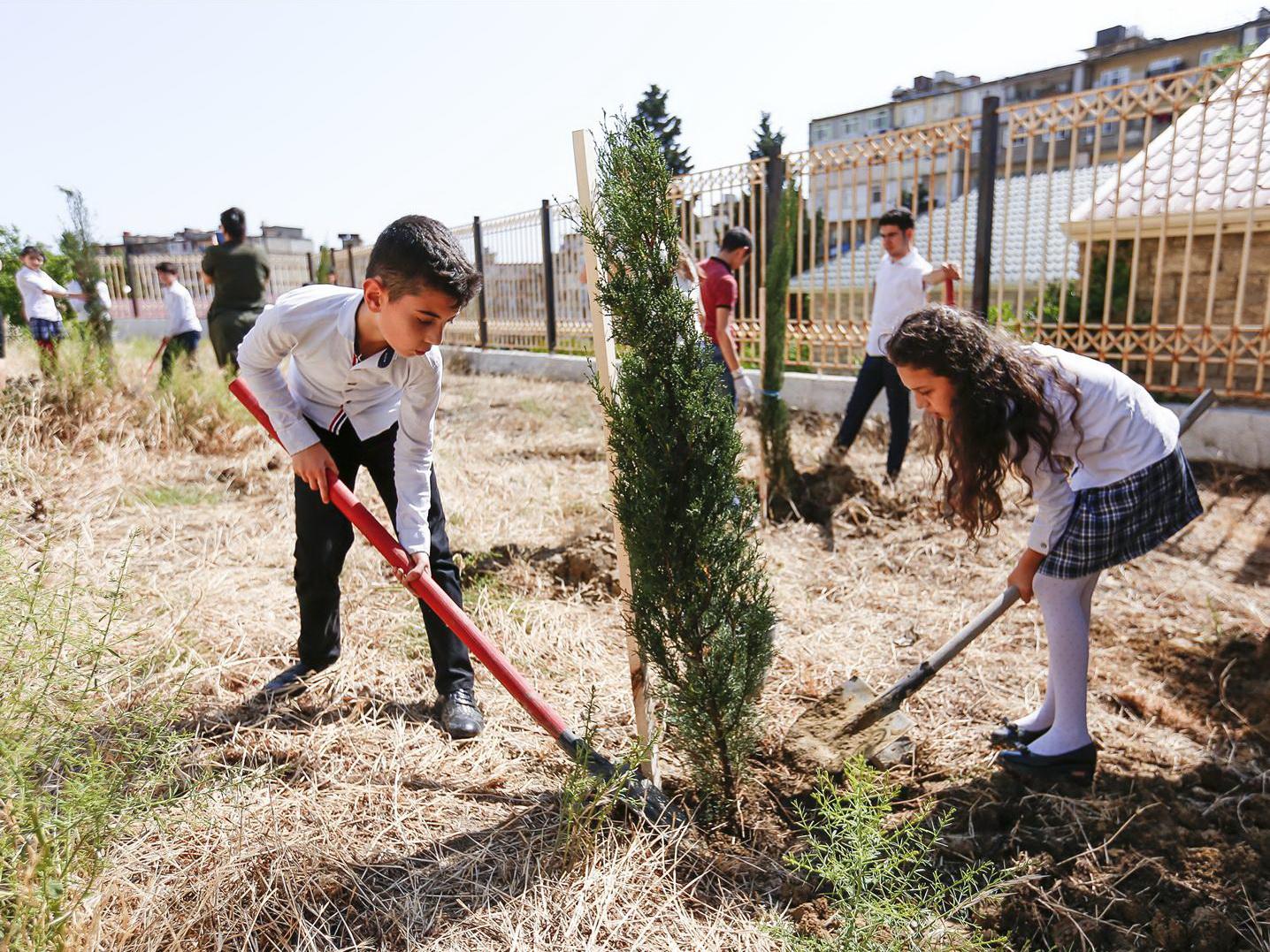 В этом году в Азербайджане засадят деревьями 1000 гектаров