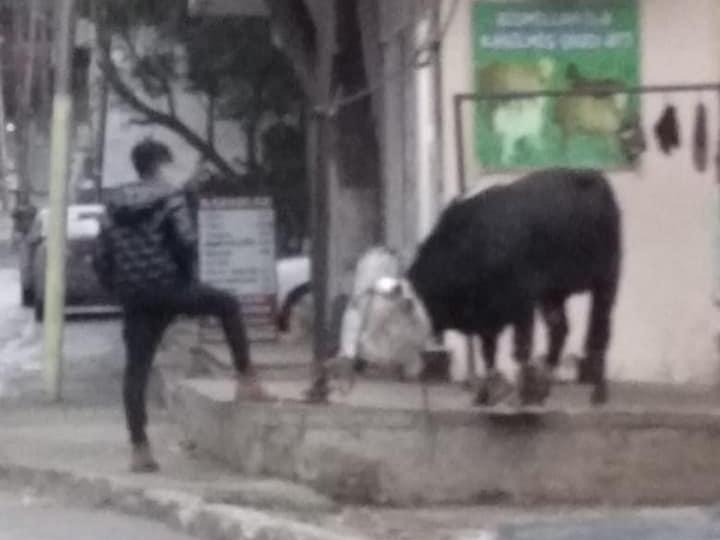 Стоит бычок, задыхается – очередной случай жестокости на улицах Баку - ФОТО