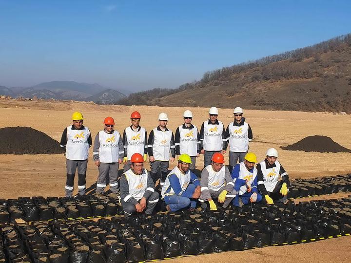 100 000 деревьев будут посажены на территории месторождения «Човдар» – ФОТО