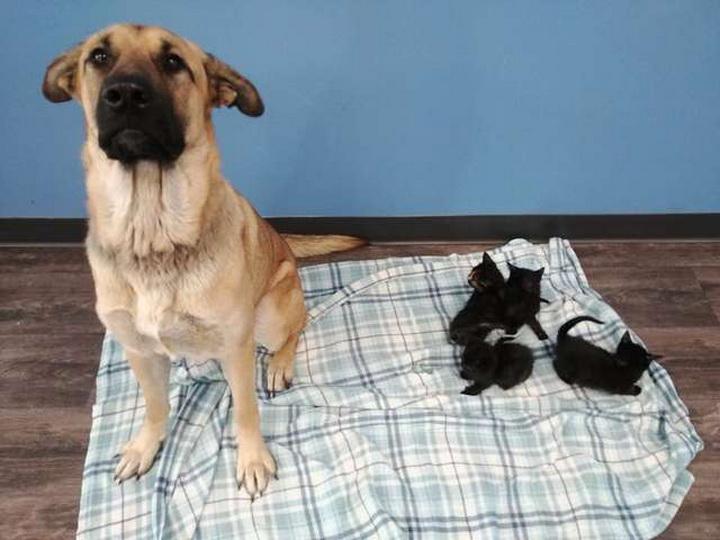 Доброта не имеет границ: бездомная собака спасла котят от смерти – ФОТО