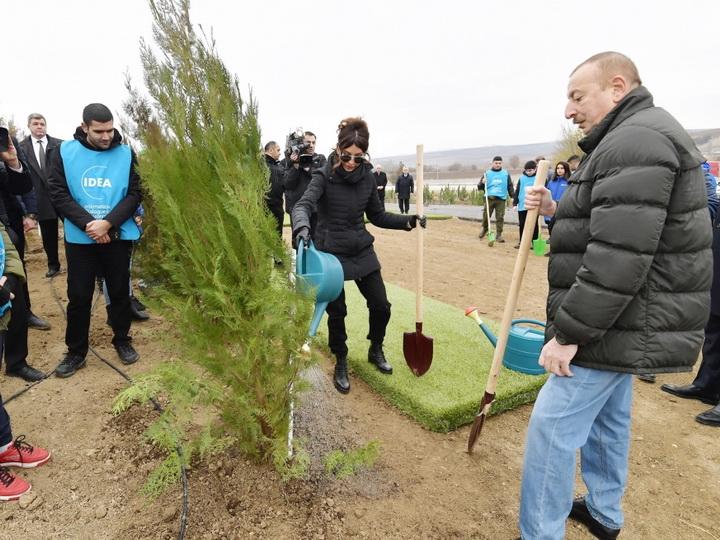 Президент Ильхам Алиев и первая леди Мехрибан Алиева приняли участие в акции по посадке деревьев в Шамахе - ФОТО