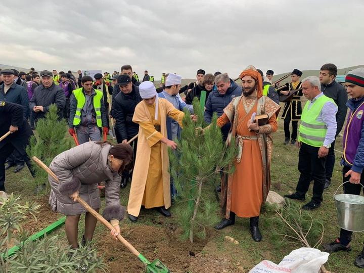 Посадим за один день 650 тысяч деревьев: Жители Абшерона активно участвуют в широкомасштабной кампании - ФОТО