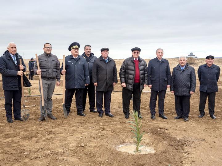 AZAL принял участие в акции по посадке деревьев - ФОТО