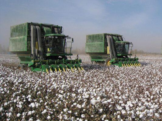 В Азербайджане собрали рекордный урожай хлопка-сырца