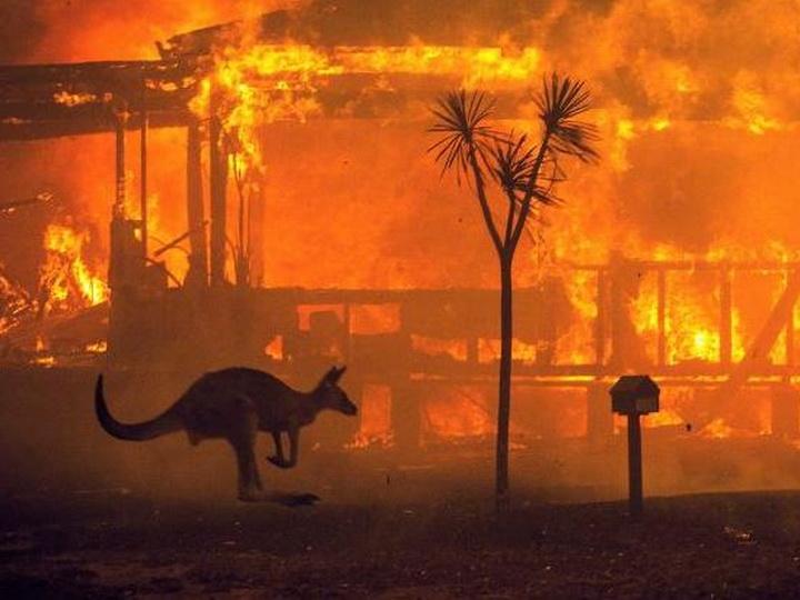 Экологический суицид: как власти Австралии «вносят вклад» в убийство планеты - ФОТО - ВИДЕО