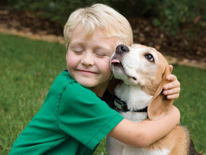 Новый предмет в школах Испании: «Уважение к животным» - ФОТО