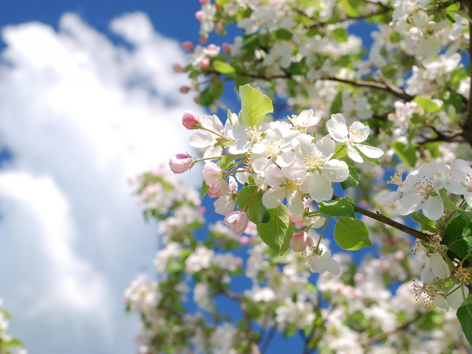 Обнародовано время наступления весны в Азербайджане