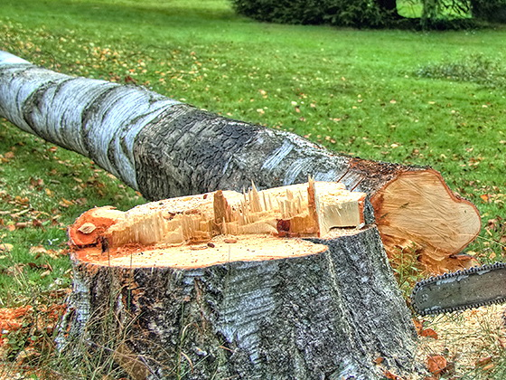 В Баку стройфирма спилила деревья