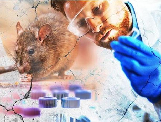 Çində yeni virus - Hantavirus nədir?