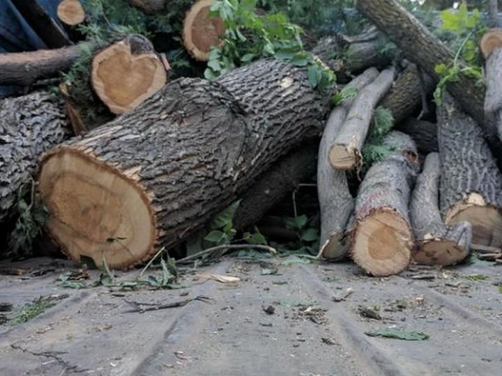 Lerikdə meşədə 30-a yaxın ağac kəsilib