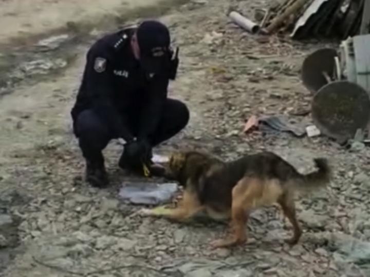 Жест доброты от азербайджанских полицейских: «Мы не забыли о бездомных животных!» - ВИДЕО