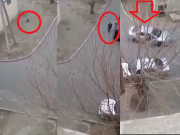 В Азербайджане мужчина расстрелял собаку прямо на улице - ВИДЕО