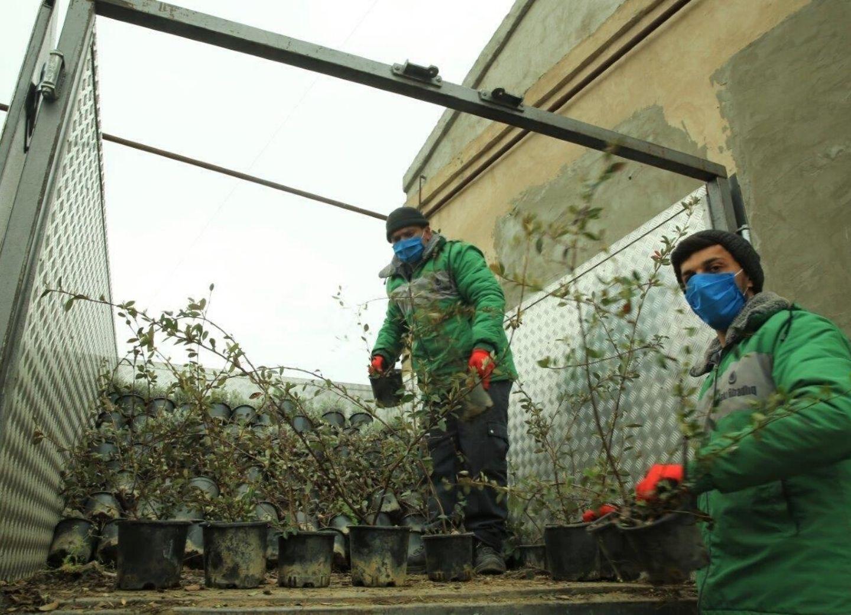 Помощь людям и заработок: Новый выгодный бизнес-проект для бакинских поселков – ФОТО