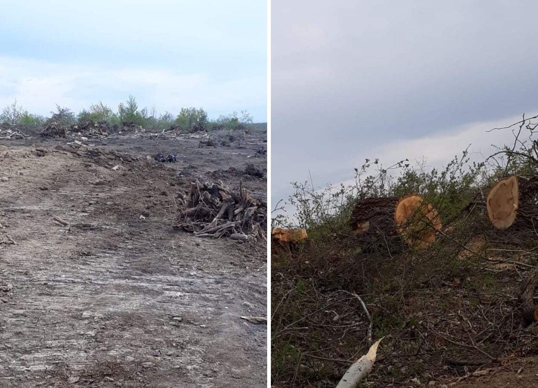 Реакция министерства на публикацию 1news.az о срубленных в лесу деревьях – ФОТО - ВИДЕО