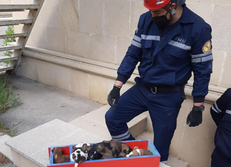 В Баку команда МЧС спасла замурованных в школьном подвале щенят – ФОТО