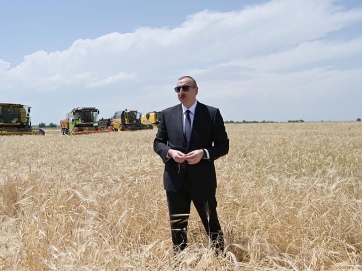 Президент Ильхам Алиев присутствовал на церемонии начала уборки пшеницы в Агджабеди - ФОТО