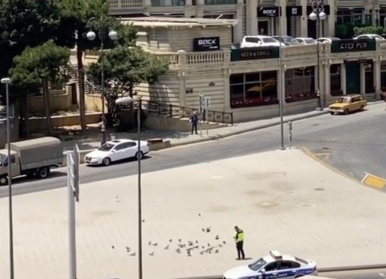 Нигяр Джамал об инспекторе Дорожной полиции, подкармливающем птиц: Добро всегда прекрасно! – ВИДЕО