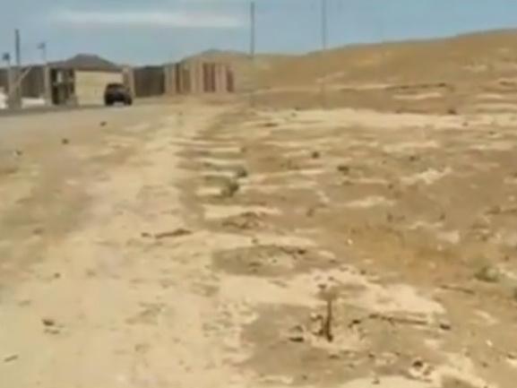 Высыхающие деревья в новом поселке Баку: Расточительство или безответственность? - ВИДЕО