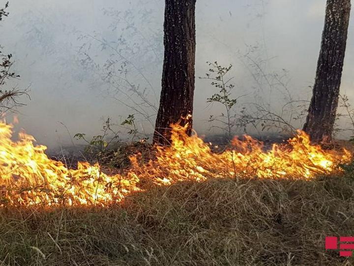 В Азербайджане начался пожар в Национальном парке Гызылагадж