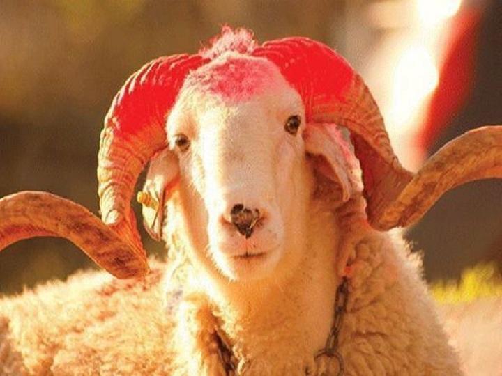 Azərbaycanda Qurban bayramı qeyd edilir
