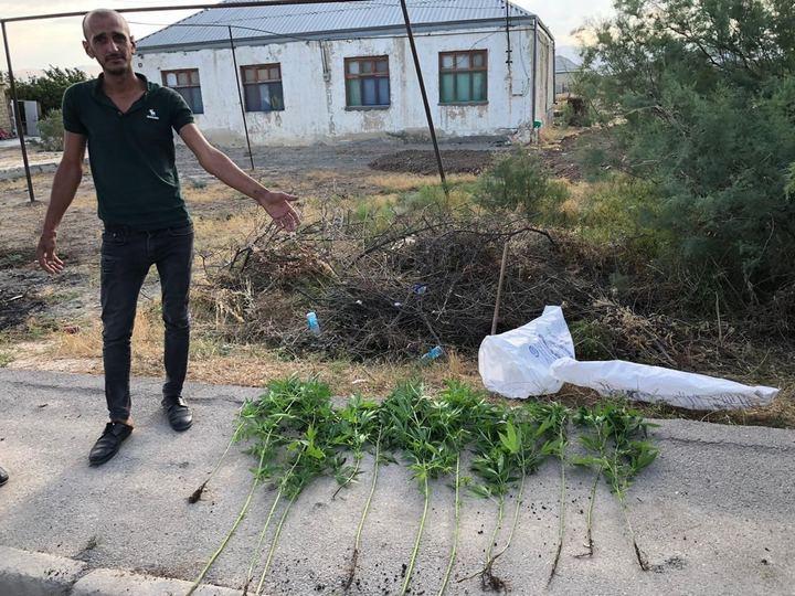 Polis Xızıda həyətində narkotik becərən şəxsi saxladı