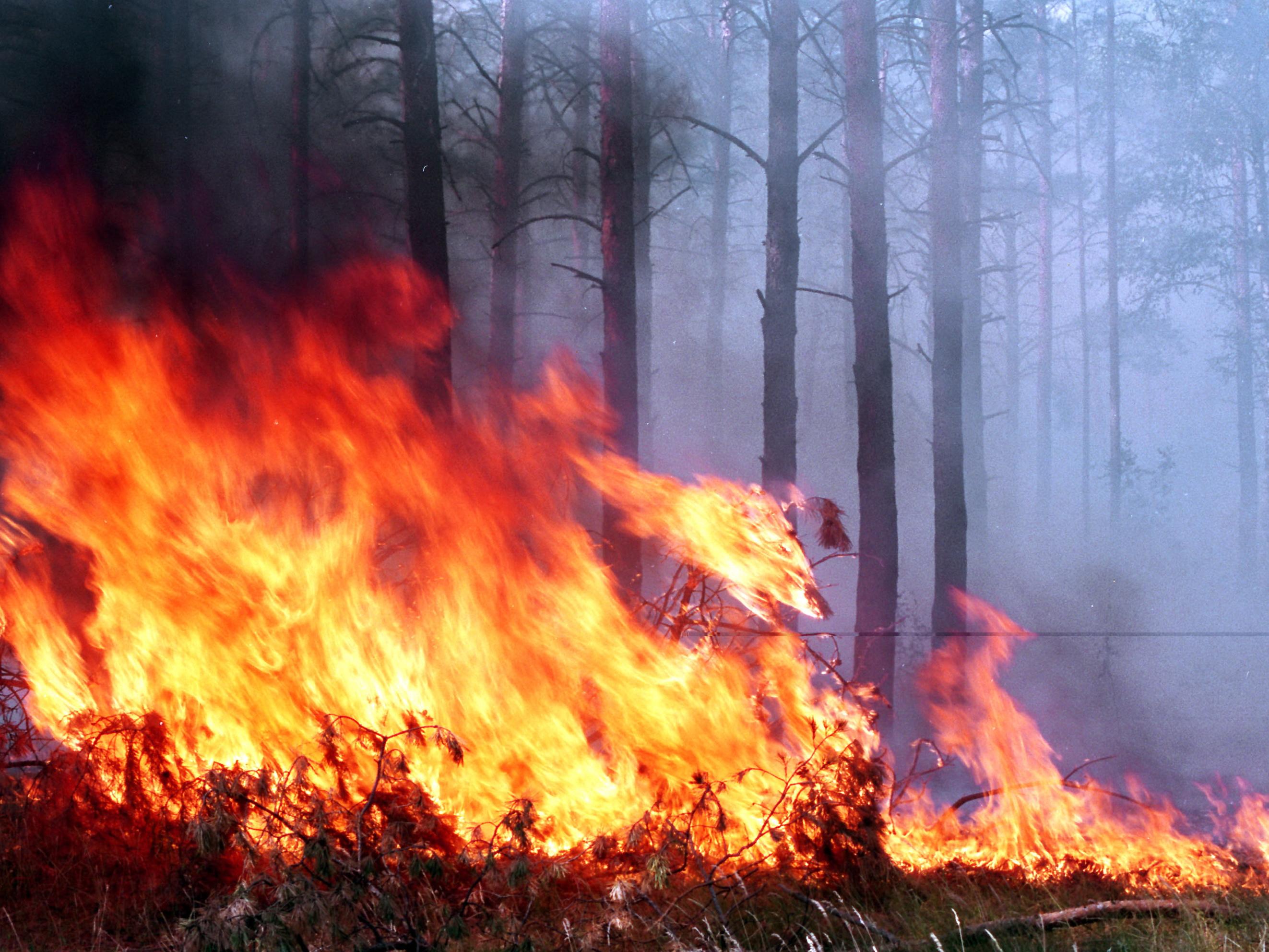 ВС Армении обстреляли территорию Дашкесанского района – вспыхнул лесной пожар