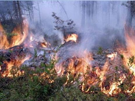 Ermənistan hücumu nəticəsində Daşkəsəndə meşə yanğını başlayıb