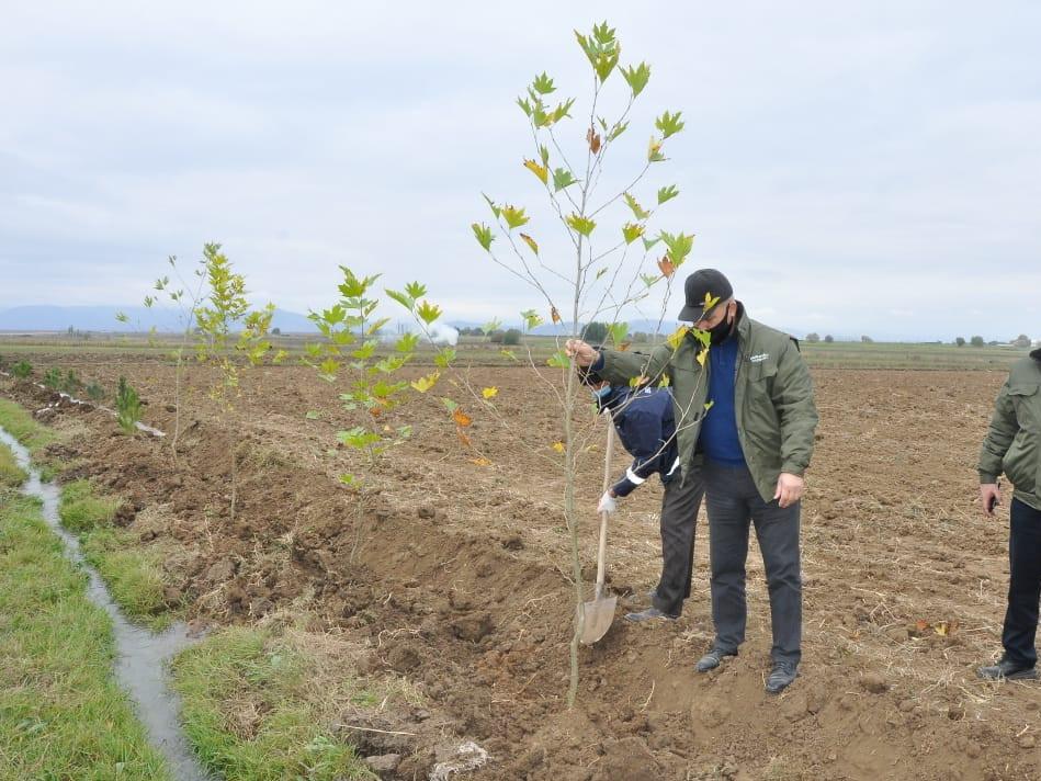 В освобожденном Агдамском районе посадили деревья - ФОТО