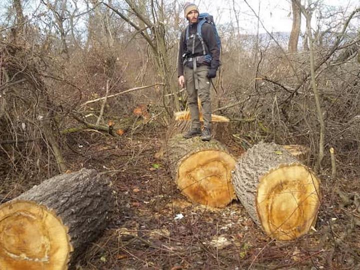 Минэкологии – о варварской вырубке лесов в Гусаре – ФОТО