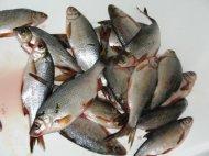 """ООО  """"Южно-Волжская Компания """" Продает речную рыбу мороженную, вяленную и..."""