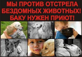 Откроются ли в Азербайджане приюты для бездомных животных?