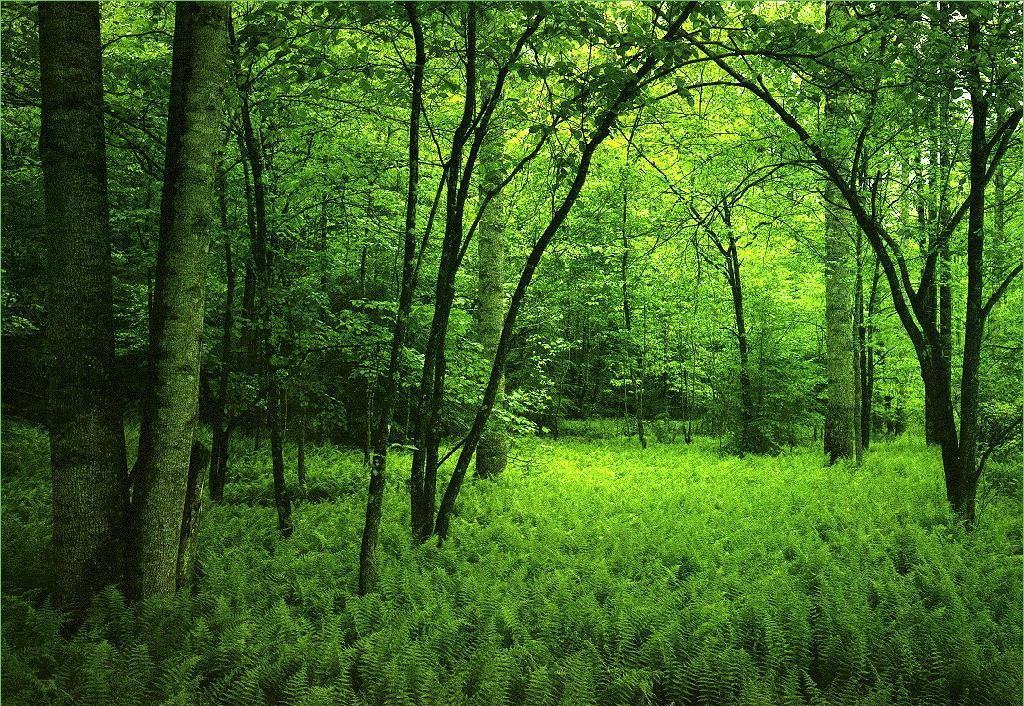 Европейская программа по защите лесов Азербайджана займется укреплением образовательной базы