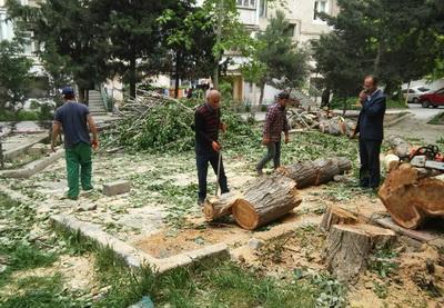 Покой нам только снится: неизвестные вновь вырубают деревья в Ясамальском районе Баку - ФОТО
