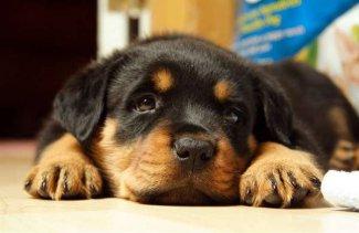 Собаки умеют различать лица не хуже людей, выяснили ученые