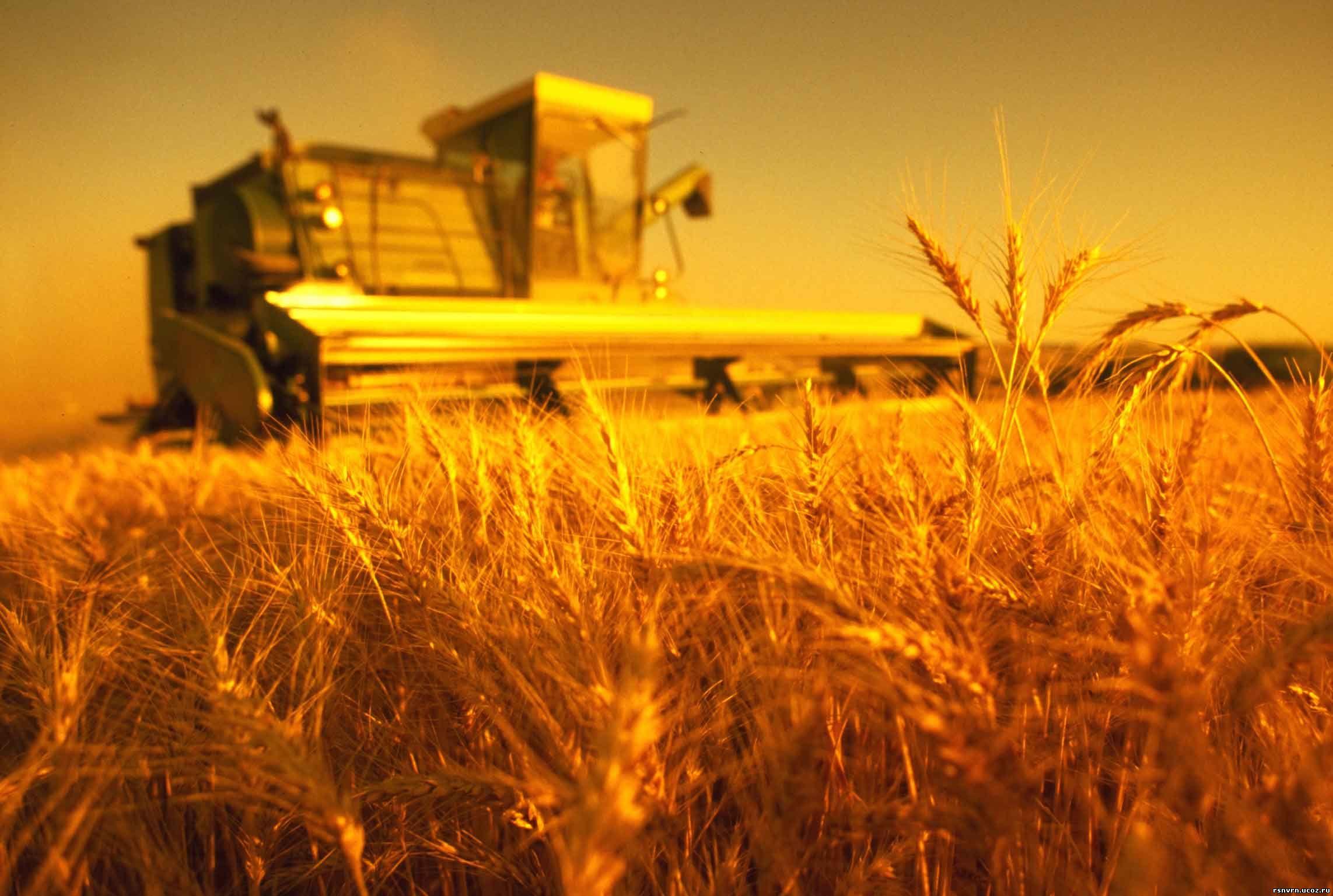 Привлекательность сельского хозяйства для банков увеличивается