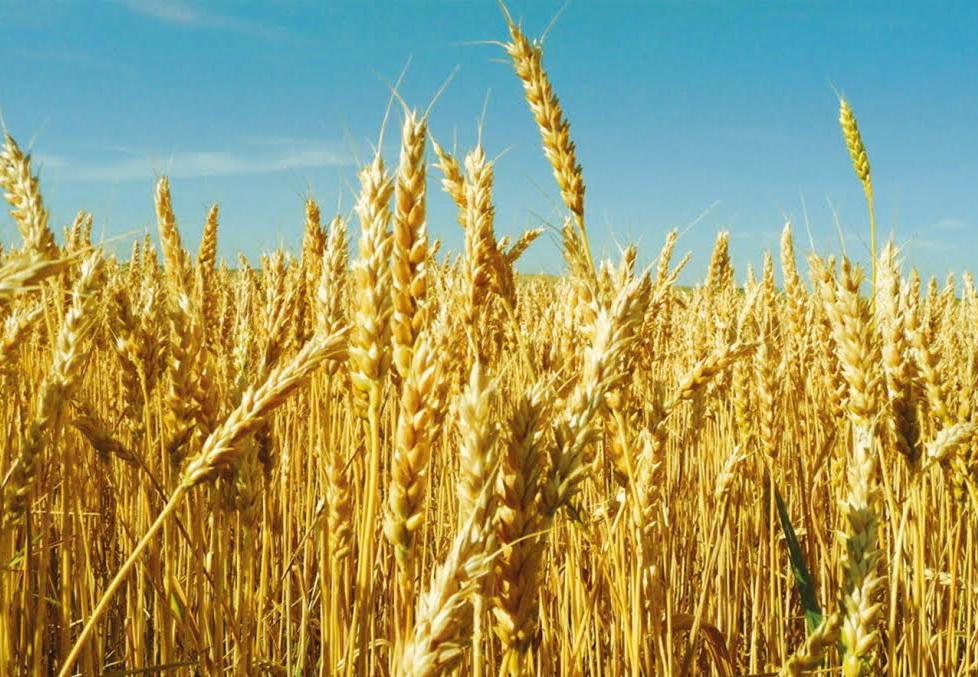Сельское хозяйство: итоги за 9 месяцев 2015 года