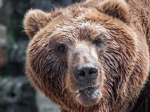 Медведь напал надевочку вКанаде