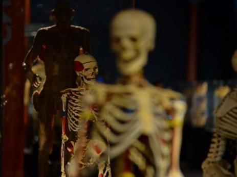Ученые описали внешность людей через одну тысячу лет