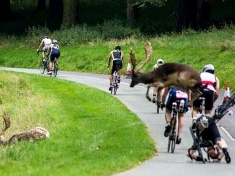 ВДублине олень сбил велосипедиста